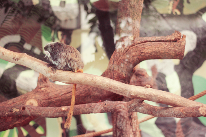 zoo-lunaret-1