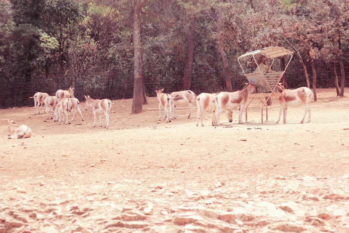 zoo-lunaret-9