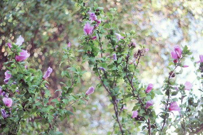 fleurs-magiques-3