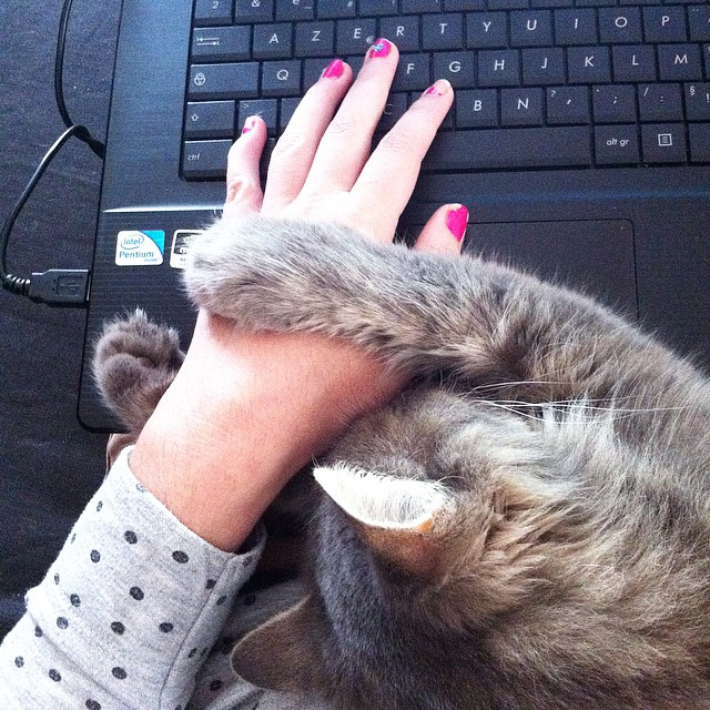 Je crois qu'Alice n'est pas la seule a aimer que je travaille à la maison le mardi... ?? #pattesdevelour #catstagram #instacat