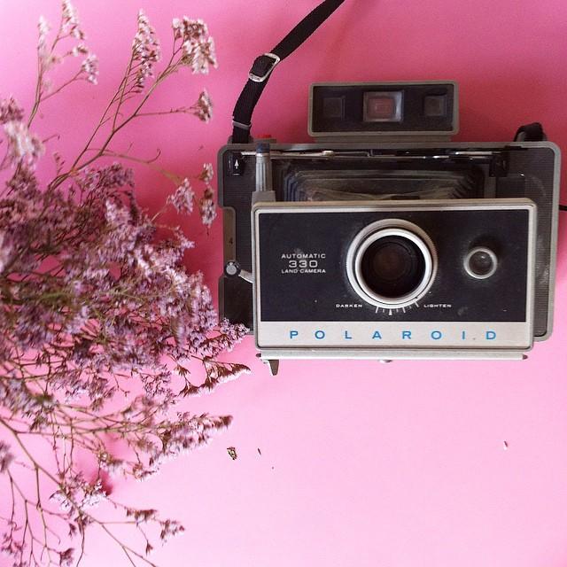 Et un dernier pour la route ?? #pola #polaroid #polaroid330 #landcamera