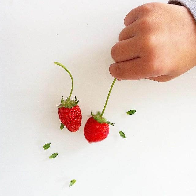 ?Non pas l'automne on veux continuer a ramasser des fraises dans le jardin? #strawberry #garden