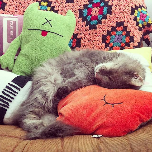 Hard life ? #catstagram #instacat #pixelsaucisse #uglydoll