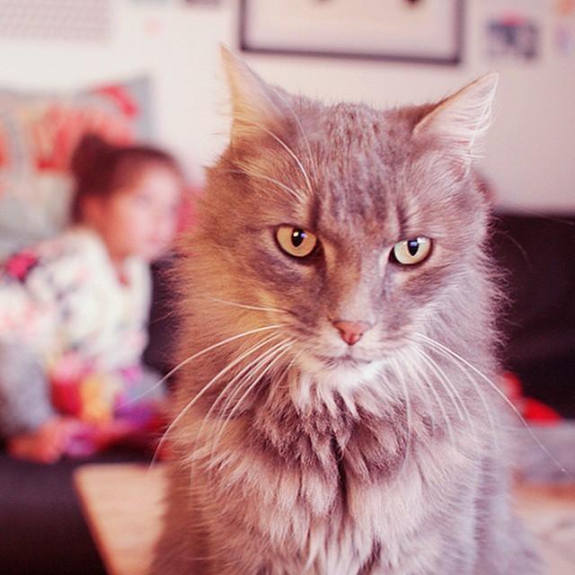 Pixel le chat qui se colle sur toutes les photos ??