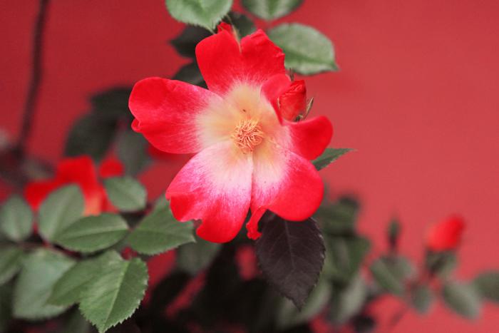 fleur-pierre auge