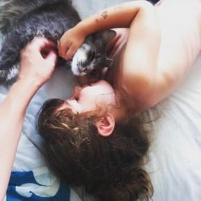 Trop damour love catstagram instacat