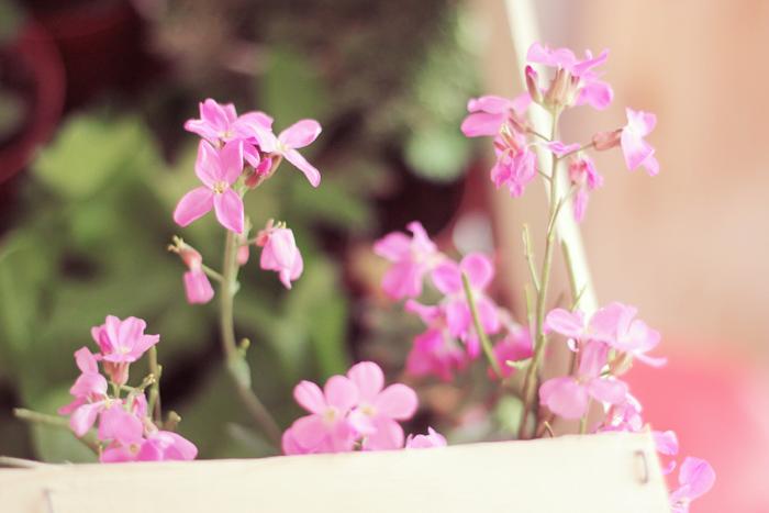 fleurs-girly