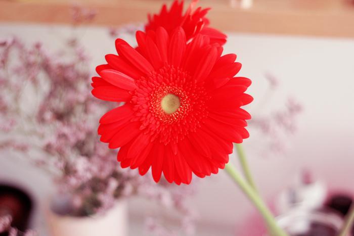 fleurs copy