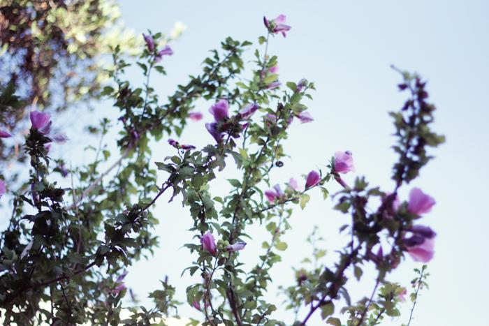 fleurs-magiques-2