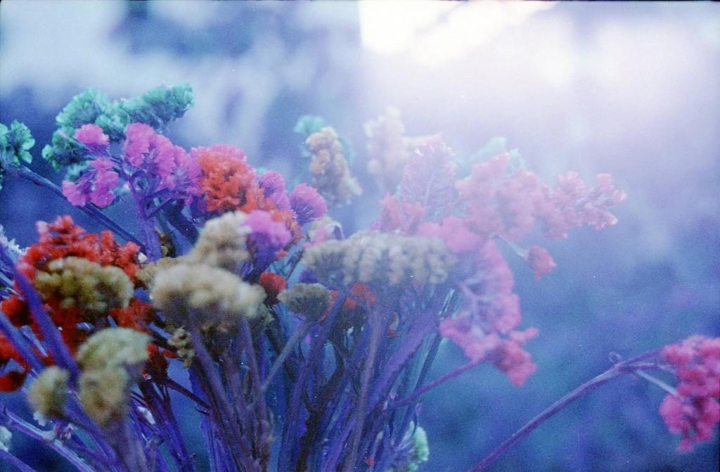 poulette-magique-purple-lomography-17
