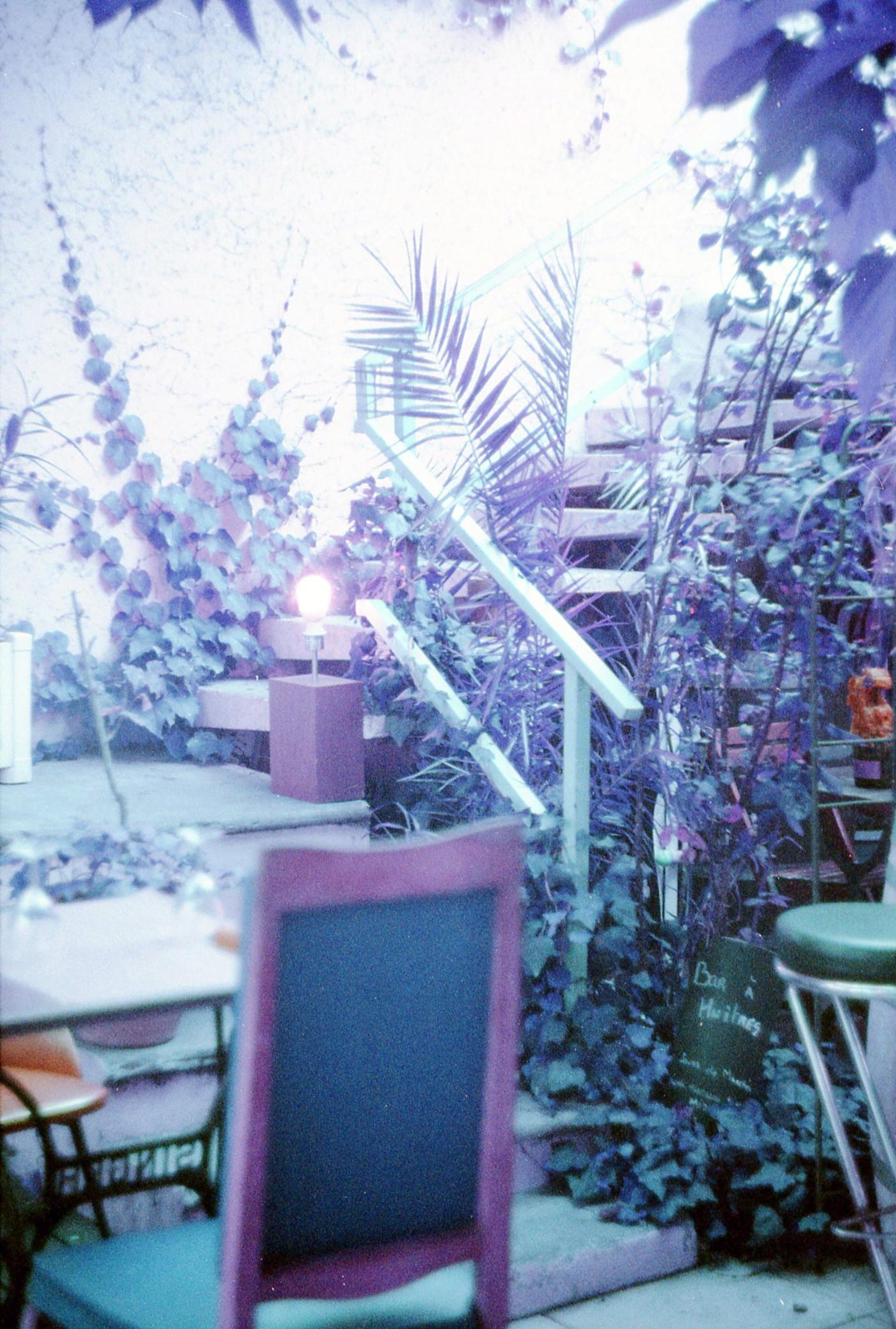 poulette-magique-purple-lomography-2