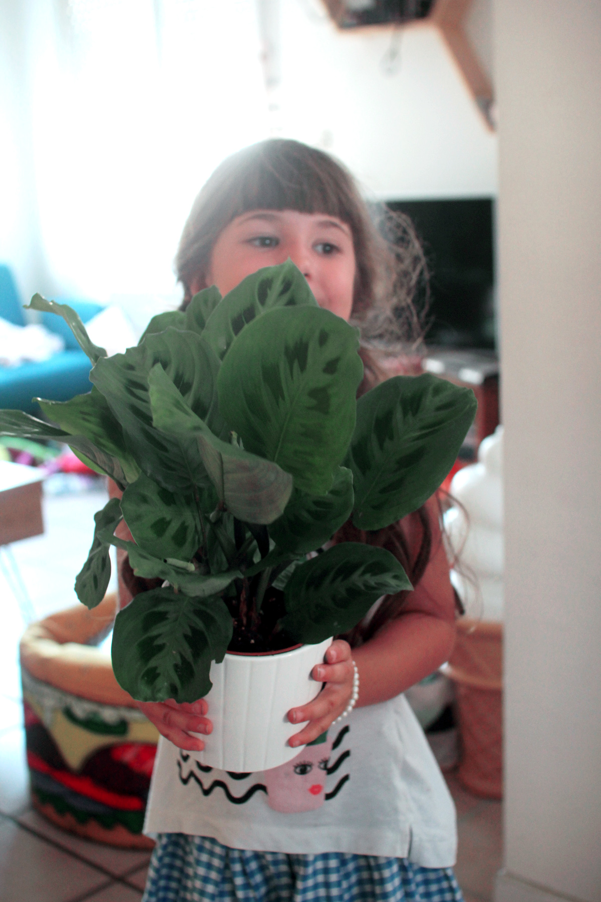 alice plante